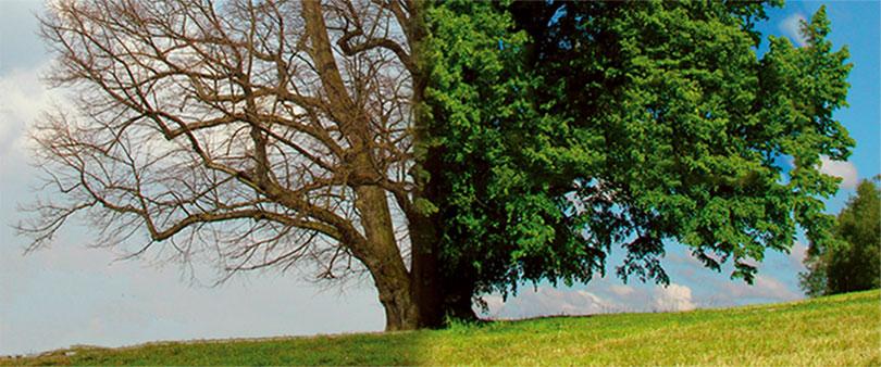 Imagebild der TelefonSeelsorge Graz zeigt einen Baum zu 2 Jahreszeiten gleichzeitig
